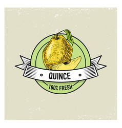 quince vintage hand drawn fresh fruits background vector image