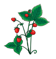 red berry strawberry with green leaves isolated vector image