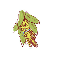 Vanilla sticks with leaves isolated icon vector