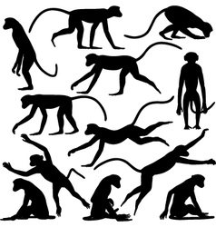 Monkey poses vector image vector image