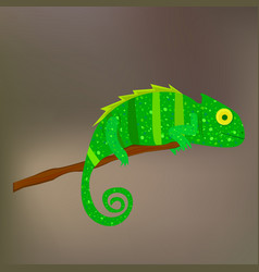 Chameleon on a branch on brown background vector