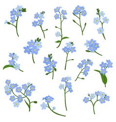 Drawing forget-me-not flowers vector