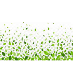 Green tree leaves falling isolated on transparent vector