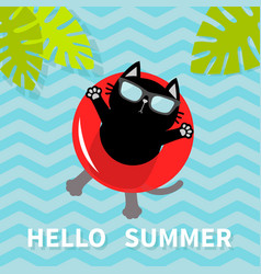 hello summer black cat floating on red air pool vector image