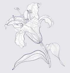 Oriental lily flower vector