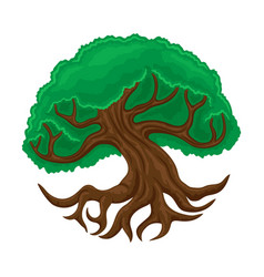 Beautiful tree with branched roots vector