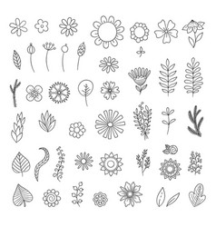 flowers doodle simple floral botanical collection vector image