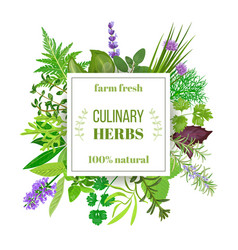 popular culinary herbs big set with squire emblem vector image vector image
