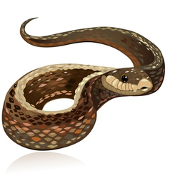 snake5 vector image vector image