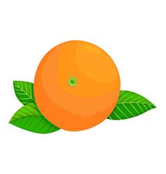 fresh ripe orange whole fruit with leaves vector image
