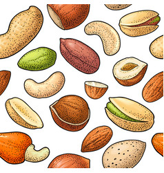 seamless pattern whole and half nut seed vector image