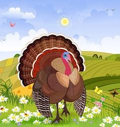 beautiful turkey in rural scenery vector image