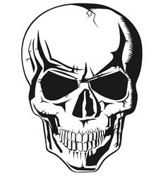 human skull new vector image vector image