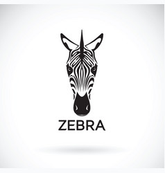 zebra face on white background wild animals vector image vector image