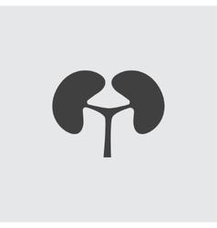 Kidney icon vector image