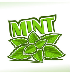 mint herb vector image