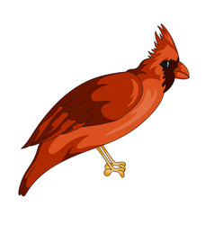 red cardinal exotic bird icon vector image