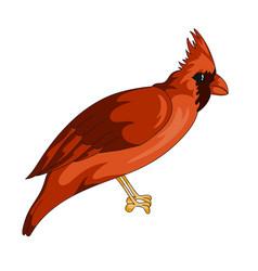 Red cardinal exotic bird icon vector