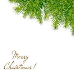 christmas tree branch vector image vector image