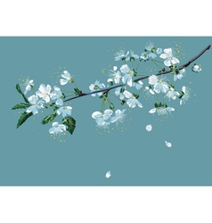 Branch of blossom cherry vector image vector image