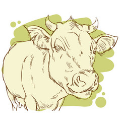 hand drawing of a happy cow vector image