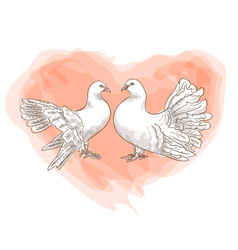 couple doves vector image