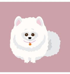 Japanese Spitz of a dog vector