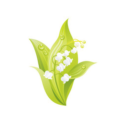 lily valley flower floral icon realistic vector image
