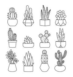 line style cactus and succulents set vector image