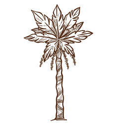 palm tree with foliage on branches monochrome vector image