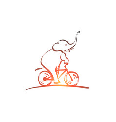 hand drawn elephant riding bicycle vector image