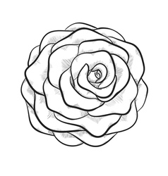 black and white rose isolated vector image