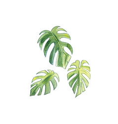 Three leaves palm vector