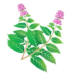 green mint branches with blossom vector image
