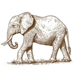 Engraving elephant vector