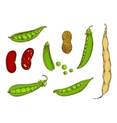 Peanut sweet green peas and beans sketch vector
