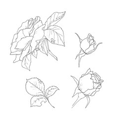 Rose Bud Tattoo Vector Images Over 510