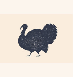 turkey bird concept design of farm animals vector image