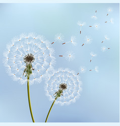background with spring dandelion blowing vector image vector image