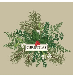 Greeting card with pine branches holly berries vector image vector image