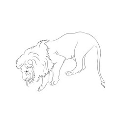 a lion who stands vector image