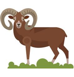 Bighorn ram wild animal isolated on white vector