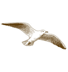 engraving antique seagull vector image