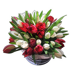 luxurious bouquet tulips vector image