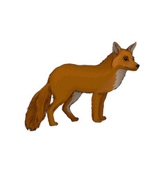 red fox wild northern forest animal vector image