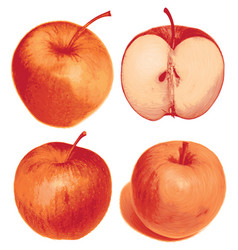 Set of isolated colored red apple half and whole vector
