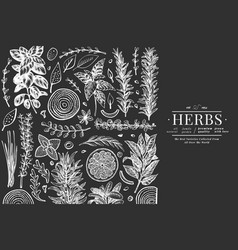 Culinary herbs banner template hand drawn vintage vector