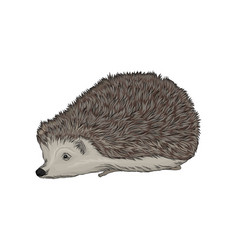 Cute hedgehog wild forest animal vector