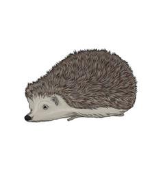 Cute hedgehog wild forest animal vector