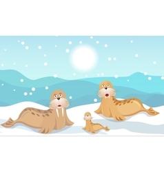 Walrus family vector image